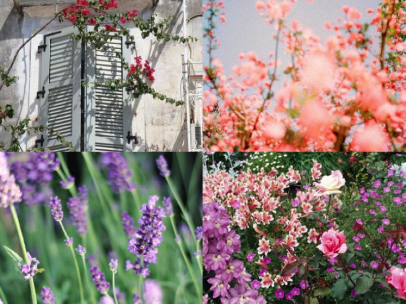 tips voor romantische tuin