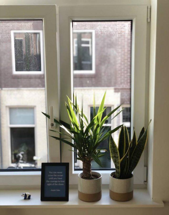 plantje op kantoor