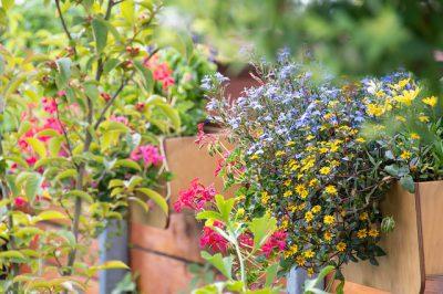 vaste planten en bloemen