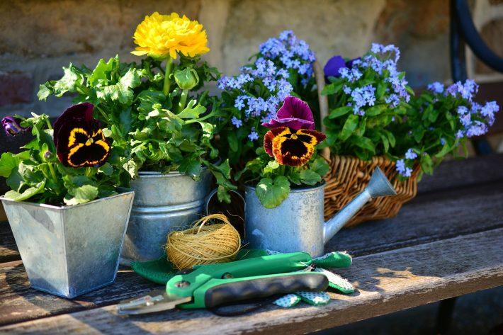 voorjaar nieuwe planten in tuin
